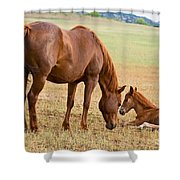 Wild Horse Mother And Foal Shower Curtain