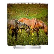 Wild Horses In California Series 2 Shower Curtain