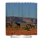 Wild Horses In Monument Valley Shower Curtain