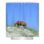 Wild Horses Of Corolla Shower Curtain