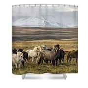 Wild Icelandic Horses Shower Curtain