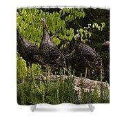 Wild Turkey Meleagris Gallopavo Shower Curtain
