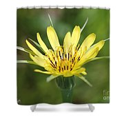 Wildflower Named Yellow Salsify Shower Curtain