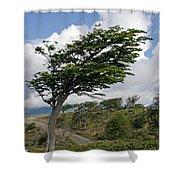 Wind-bent Tree In Tierra Del Fuego Shower Curtain