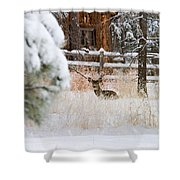 Winter Doe Shower Curtain