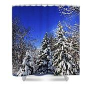 Winter Forest Under Snow Shower Curtain