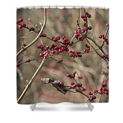 Winterberries Shower Curtain