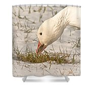 Wintering Snow Goose Shower Curtain