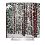 Winters Forest Shower Curtain