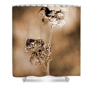 Withering Weed Shower Curtain