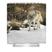 Wolf River Shower Curtain