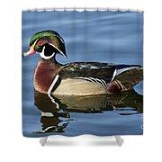 Wood Duck Drake Shower Curtain