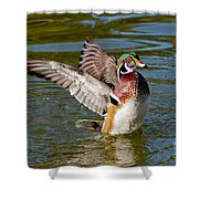 Wood Duck Drake Flapping Wings Shower Curtain