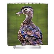 Wood Duck Juvenile Shower Curtain