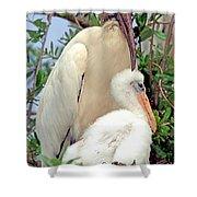 Wood Stork Mycteria Americana Shower Curtain