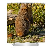 Yellow Bellied Marmot On Alert In  Rocky Mountain National Park Shower Curtain