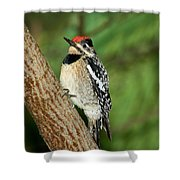 Yellow-bellied Sapsucker Shower Curtain