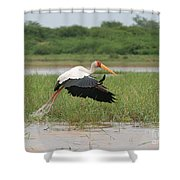 Yellow-billed Stork Mycteria Ibis Shower Curtain