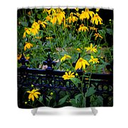 Yellow Coneflowers Echinacea Wrought Iron Gate  Shower Curtain by Rich Franco