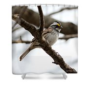 Yellow Crowned Sparrow Shower Curtain