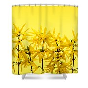 Yellow Forsythia Flowers Shower Curtain