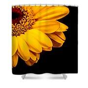 Yellow Gerbera Daisy Shower Curtain