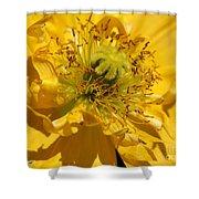 Yellow Iceland Poppy Shower Curtain