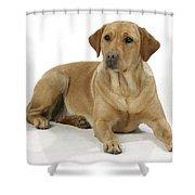 Yellow Labrador Retriever Shower Curtain