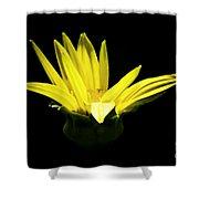 Yellow Shower Curtain