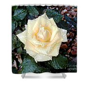 Yellow Rose At Dawn Shower Curtain
