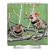 Yellow-shafted Northern Flickers Shower Curtain