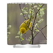 Yellow Warbler -1 Shower Curtain