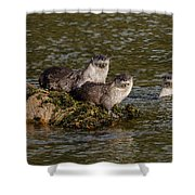 Yellowstone Otters Shower Curtain