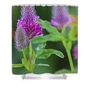 Young Delphinium Shower Curtain