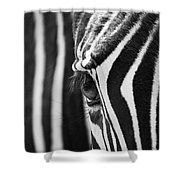Zebra Eye Shower Curtain