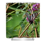 Zebra Swallowtail Butterfly At Butterfly Bush Shower Curtain