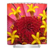 Zinnia Named Swizzle Scarlet And Yellow Shower Curtain