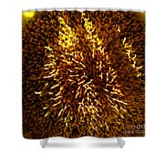1 Zz Sunflower Shower Curtain
