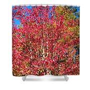 Autumn Color Shower Curtain