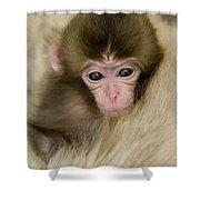 Baby Snow Monkey, Japan Shower Curtain