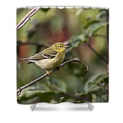 Blackpoll Warbler Shower Curtain