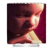 Developing Fetus Shower Curtain