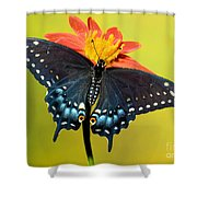 Eastern Black Swallowtail Butterfly Shower Curtain