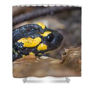 Fire Salamander Shower Curtain