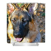 10-month-old Shepherd Shower Curtain