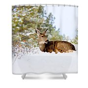 Mule Deer In Snow Shower Curtain