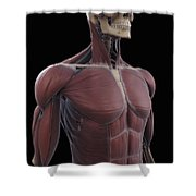 Muscles Of The Upper Body Shower Curtain