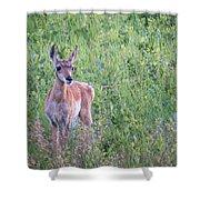 Pronghorn Antelope Portrait Shower Curtain