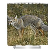 Patagonia Grey Fox Shower Curtain