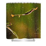 Red-eyed Tree Frog Shower Curtain